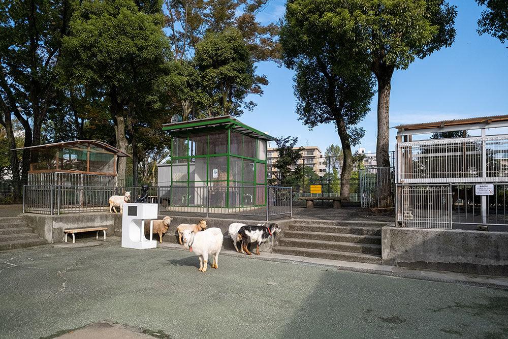 徳丸ヶ原公園こども動物園高島平分園 動物園内