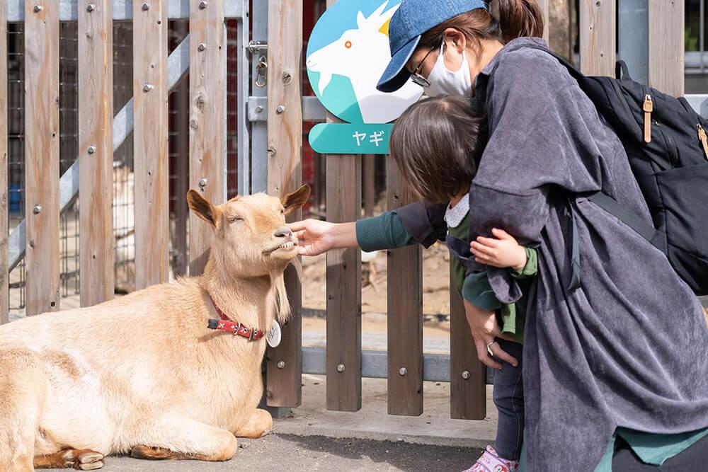 東板橋公園 動物園内